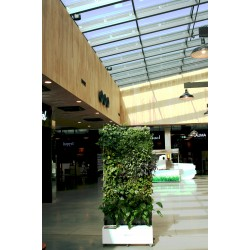 Greenwall mobile hydroponic modul for rent